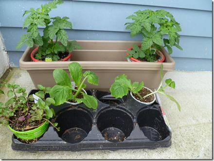 Plants on May 22, 2011
