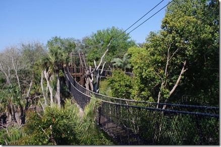 Double rope bridges