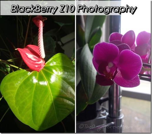 BlackBerry Z10 photos of flowers