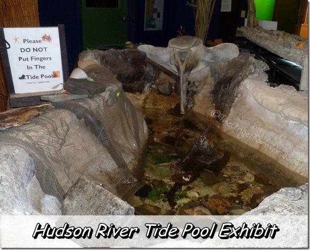 Hudson River Tide Pool Exhibit at CMOST