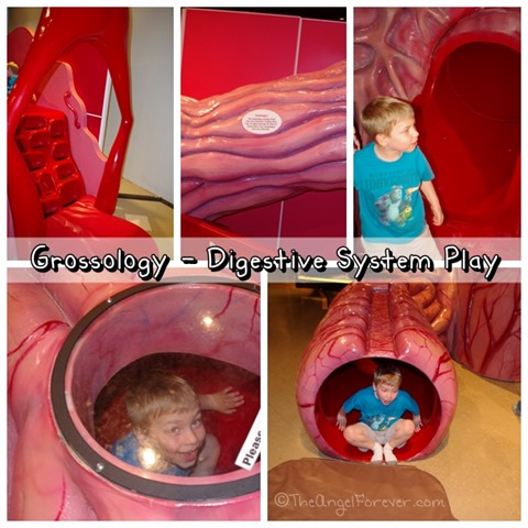Grossology Digestive System Play Area miSci NY