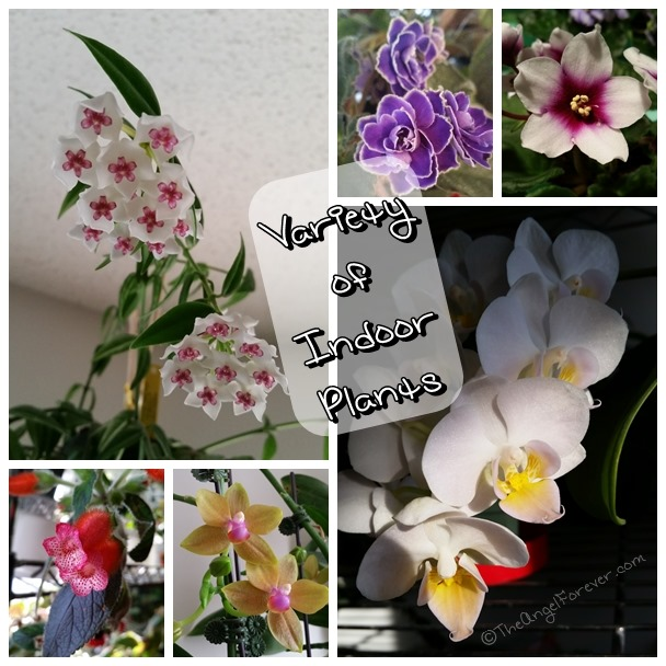 Variety of indoor flowering plants