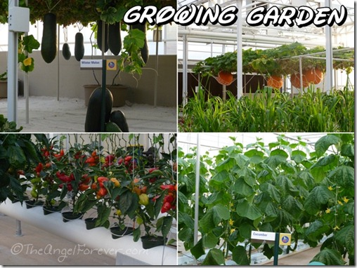 Growing items in The Land at Epcot