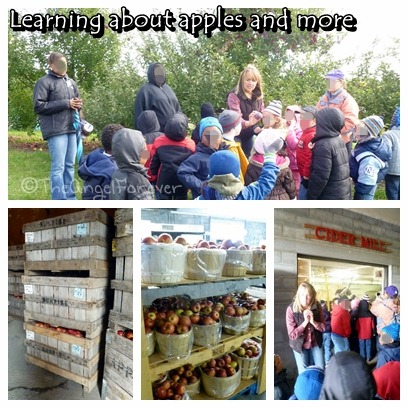 Learning about apples at Indian Ladder Farms