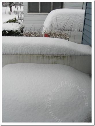 Snowy Dec 9 2009