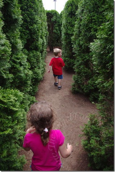 Hedge Maze Adventure