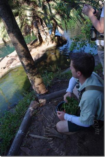 Researcher feeding hippos