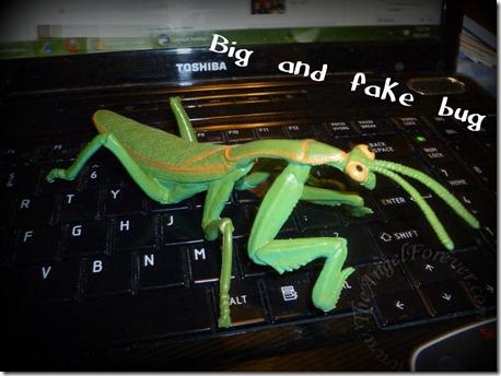 Fake praying mantis