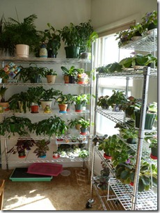 Plants Section 2