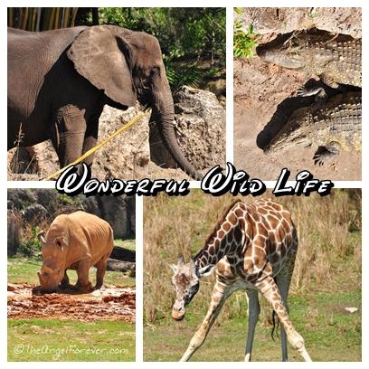 Animal Kingdom Wild Life