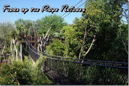 Disney's Animal Kingdom Rope Bridges