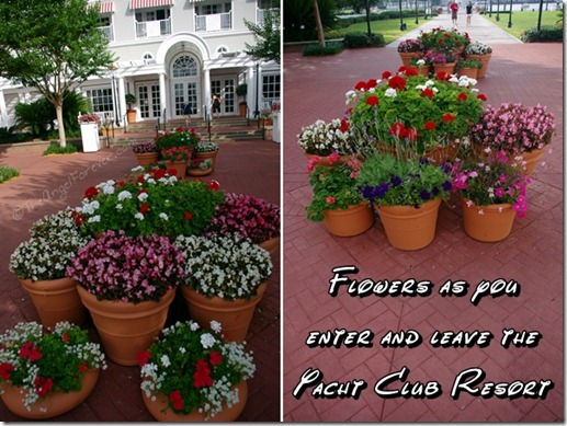 Flowers at Disney's Yacht Club Resort