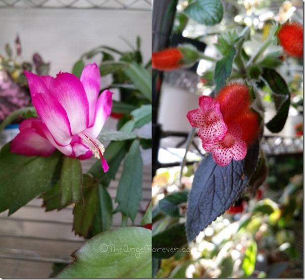 Beautiful textures on the indoor flowers