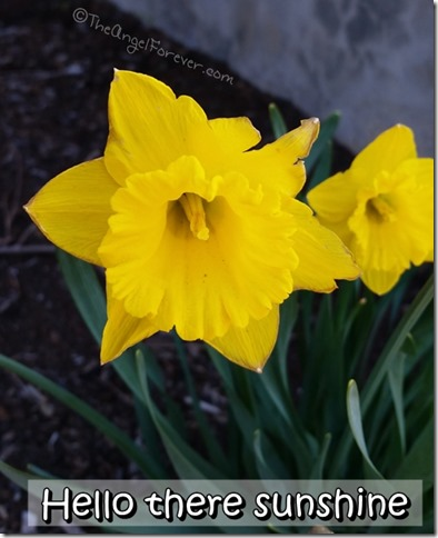 Daffodils with the Samsung Galaxy S5