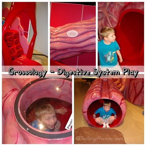 Grossology Digestive System Play Area miSci NY