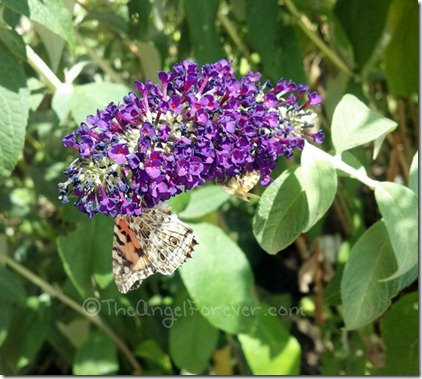 Beautiful Butterfly and Bee