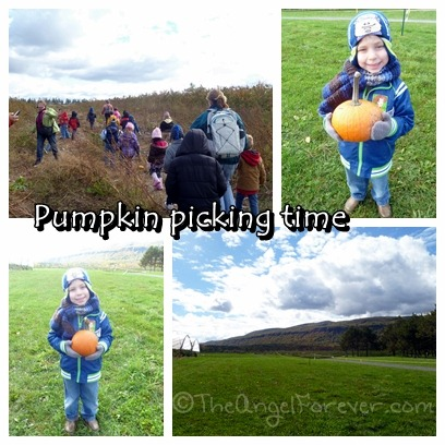 Pumpkin picking at Indian Ladder Farms